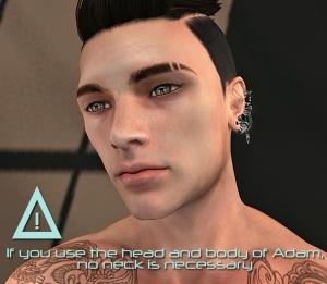 ADAM neck01b